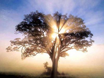 mira un árbol